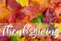 Mensaje feliz de la tarjeta de felicitación de la acción de gracias Imagenes de archivo