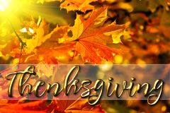 Mensaje feliz de la tarjeta de felicitación de la acción de gracias Fotos de archivo libres de regalías