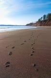 Menschen-und Hundefuss-Jobstepps entlang einem Strand Lizenzfreie Stockfotos