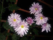 Menschenleben mögen Blumen kochen stockfotos
