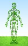 Menschlich - Baum Lizenzfreie Stockfotos