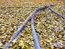 Menschlich-Form-Baum-Wurzel Stockfotografie