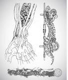 Menschliche Anatomiehand und -rückgrat mit Weinlesemechanismus in der Dampfpunkart Stockfotos