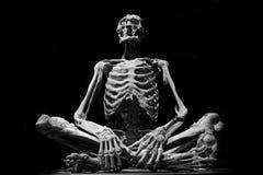 menschliche ART Modell-Medizingrausigkeit des Skeletts Leute lokalisierte schwarze weiße stockbilder