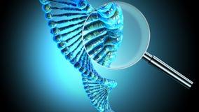 Menschliche DNA-Schnur Stockfoto