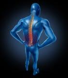 Menschliche Dornlage der rückseitigen Schmerz Stockfotos