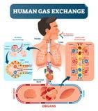Menschliche Gaswechselkurssystem-Vektorillustration Sauerstoffreise von Lungen zu Herz, zu allen Körperzellen und zurück zu Lunge lizenzfreie abbildung