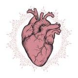 Menschliche gezeichnete Linie Kunst und dotwork des Herzens anatomisch korrekte Hand Grelle Tätowierung oder Druckdesignvektorill stock abbildung