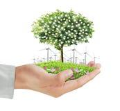 Menschliche Hände, die Baum, Glühlampe halten Lizenzfreies Stockbild