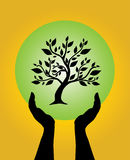 Menschliche Hände, die Baum sich interessieren Stockfotos