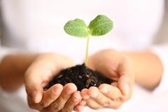 Menschliche Hände, die grüne kleine Anlage anhalten Neues Leben-Konzept Lizenzfreie Stockfotos