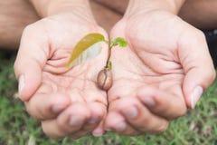 Menschliche Hände, die neues Lebenkonzept des Pflänzchens halten Lizenzfreies Stockbild