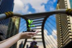 Menschliche Hände halten die Bäume, die in den Händen, mit unscharfer Stadtlandschaft wachsen und Wolkenkratzerhintergründe,  lizenzfreie stockfotos