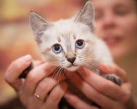 Menschliche Hände halten sorgfältig ein kleines Kätzchen lizenzfreie stockfotografie