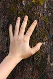 Menschliche Hand berührt die Baumrinde Lizenzfreies Stockfoto