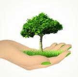 Menschliche Hand mit Gras und Baum. Vektor Stockfoto