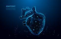 Menschliche Herzanatomieformlinien und -dreiecke Polygonales menschliches Organ 3D auf blauem Hintergrund Maschenkunst stock abbildung