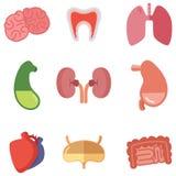Menschliche innere Organe auf weißem Hintergrund Vektorikonen eingestellt in Karikaturart Lizenzfreie Stockfotografie