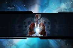 Menschliche Lungen Stockbild