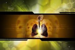 Menschliche Lungen Lizenzfreie Stockbilder
