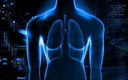 Menschliche Lungen Lizenzfreies Stockbild