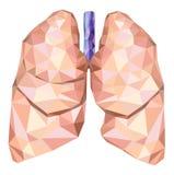 Menschliche Lungen in niedrig Poly mit der Trachea Vektor Stockbilder