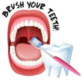 Menschliche Mund-und Zahn-Bürste lizenzfreie abbildung