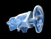 Menschliche Ohren stock abbildung