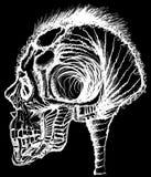 Menschliche Schädel-/Weinleseillustration Stock Abbildung
