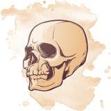 Menschliche Schädelhandzeichnung Drei viertel Winkel Lineare Zeichnung gemalt in 3 Schatten, lokalisiert auf Schmutz gemasert lizenzfreie abbildung