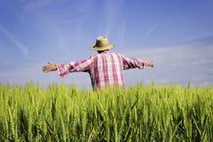 Menschliche Vogelscheuche auf dem schönen grünen Weizengebiet Stockfotografie