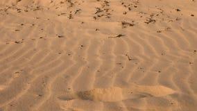 Menschlicher Abdruck auf trockenem Sand im Wüstenabschluß oben Abdruck im Sandhintergrund stock video