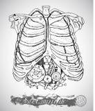 Menschlicher Anatomiekasten mit Weinlesemechanismus in den Rippen in der Dampfpunkart Stockfotografie