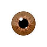Menschlicher brauner Augapfelirisschüler lokalisiert auf weißem Hintergrund Auge Stockbilder