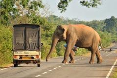 Menschlicher Elefantkonflikt Stockfotos
