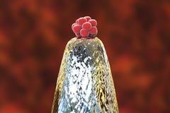 menschlicher Embryo 16-cell auf einem Nadelspitzen Lizenzfreies Stockbild