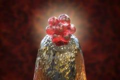 menschlicher Embryo 16-cell auf einem Nadelspitzen Lizenzfreies Stockfoto
