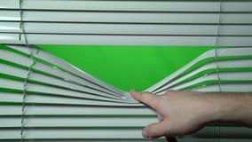 Menschlicher Finger öffnet den Jalousie unten Grüner Bildschirm stock footage