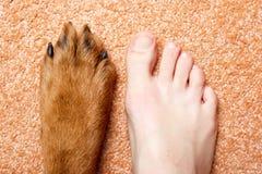 Menschlicher Fuß und Tatze. Lizenzfreie Stockbilder