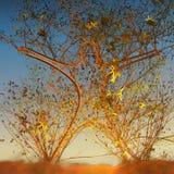 Menschlicher geformter Baum, der in der Illustration des Sonnenuntergangs 3d wächst Lizenzfreie Stockfotografie