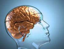 Menschlicher Glaskopf mit Gehirn Stockbild