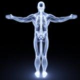 Menschlicher Körper Stockfotografie