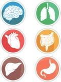 Menschlicher Körper-Organ-Ikone Stockfotos