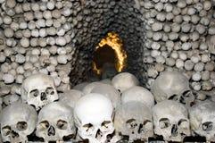 Menschlicher Knochen Lizenzfreie Stockfotos