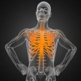 Menschlicher Röntgenfotografiescan Stockbild