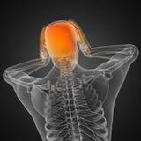 Menschlicher Röntgenfotografiescan Stockbilder