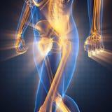 Menschlicher Röntgenfotografiescan stockfoto