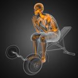 Menschlicher Röntgenfotografiescan im Gymnastikraum Stockfotos