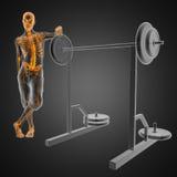Menschlicher Röntgenfotografiescan im Gymnastikraum Lizenzfreie Stockbilder