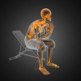 Menschlicher Röntgenfotografiescan im Gymnastikraum Stockbilder